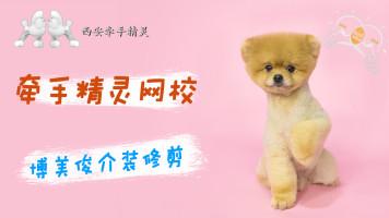 宠物美容博美日韩系俊介装示范教程