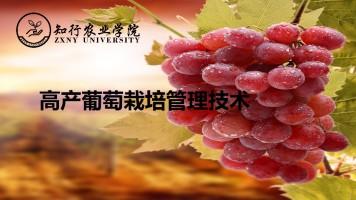 葡萄免费公开课