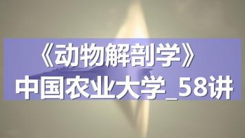 K7108_《动物解剖学》_中国农业大学_58讲