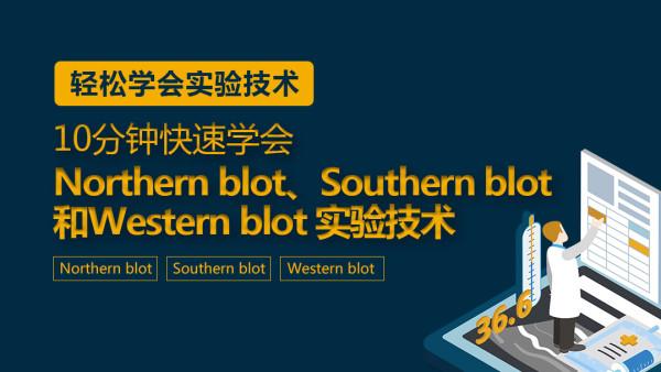 10分钟:快速学会Northern blot、Southern blot和Western blot