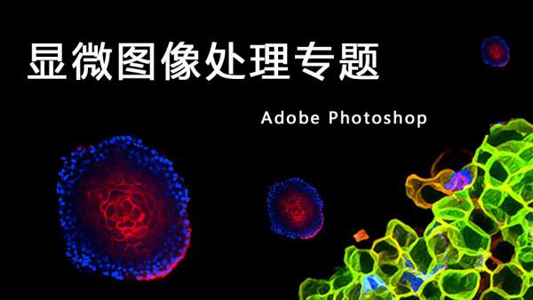 显微图像处理专题(PS软件)