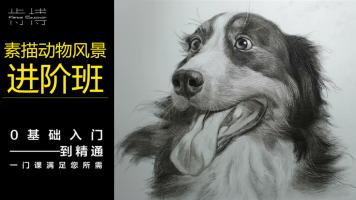 素描动物风景+基础系统训练学习班【肯博美术】-美术绘画