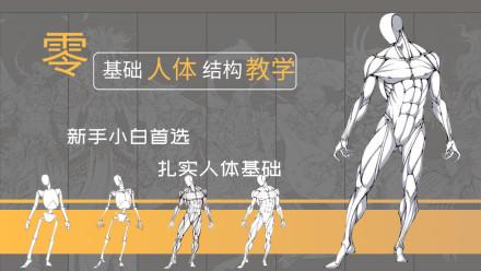 人体结构基础框架知识