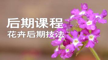 花卉后期技法专题课
