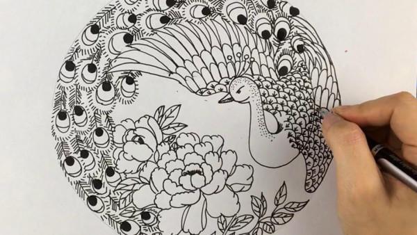 【雅盛美术】教你画线描《孔雀》适合8岁以上美术爱好者
