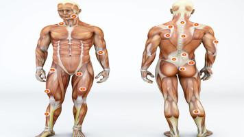 《解剖列车》详解,深度分析肌筋膜经线