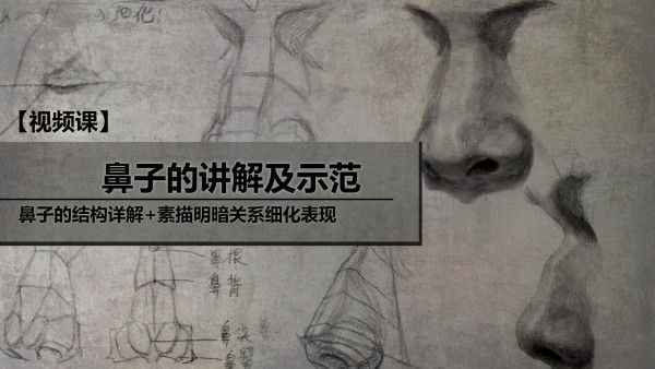 鼻子的讲解及示范
