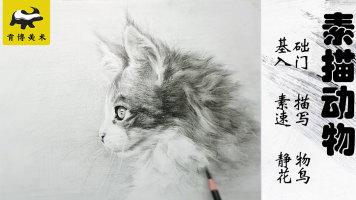动物素描猫基础快速入门【实战速成】-肯博美术