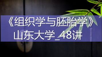 K7737_《组织学与胚胎学》_山东大学_48讲