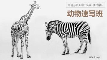 动物速写班VIP系统特训课程【重彩堂教育】
