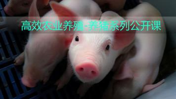 前沿高效农业养殖-养猪系列精品课程【牛一点农业】