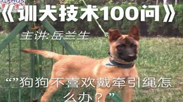 """训犬技术100问之""""狗狗不喜欢戴牵引绳怎么办?"""""""