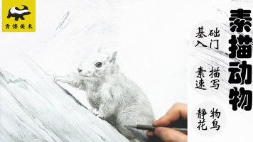 动物素描松鼠基础快速入门【实战速成】-肯博美术