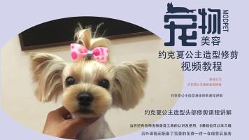 宠物美容视频,宠物美容教程,约克夏公主造型美容视频