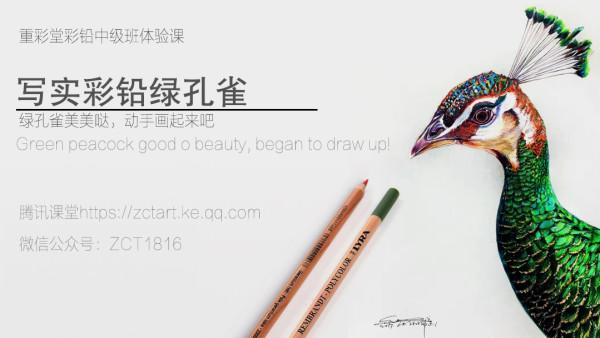 写实彩铅动物篇—绿孔雀【重彩堂教育】