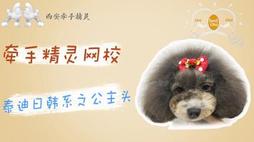 宠物美容日韩系创意公主头