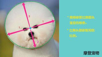 宠物美容教程、宠物美容视频、比熊犬美容教程视频