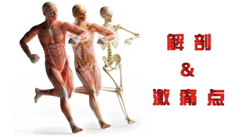 """【肌肉解剖及激痛点详解】——带你轻松搞定每一只""""肌""""!"""