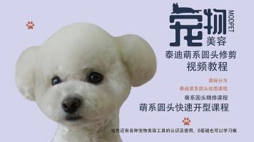 泰迪美容视频,宠物美容视频,宠物美容教程,萌系宠物美容视频