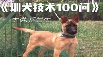 训犬技术100问