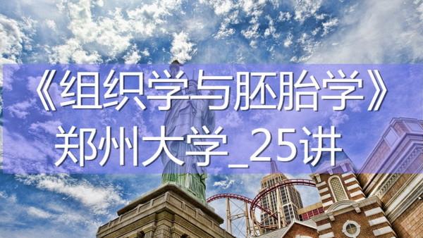 K7736_《组织学与胚胎学》_郑州大学_25讲