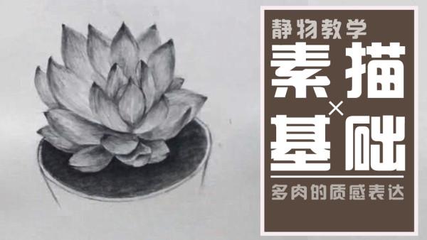 【视频】零基础素描/风景植物/动物肖像/水彩水粉/油画人物