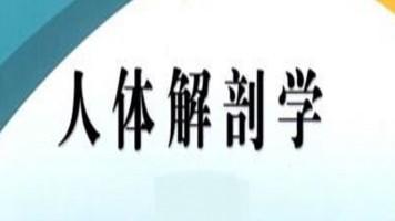 人体解剖学(全50讲)【理工学社】