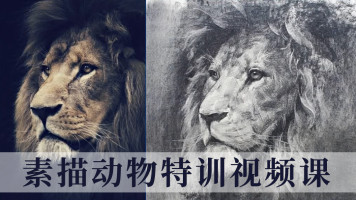 【系统视频课】素描动物【合尚教育】