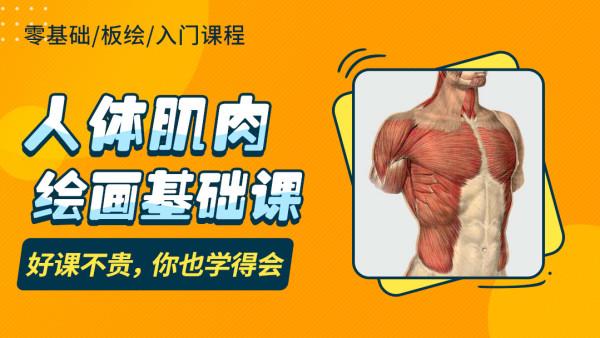 人体肌肉绘画基础课