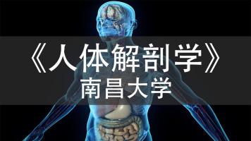 《人体解剖学》_南昌大学