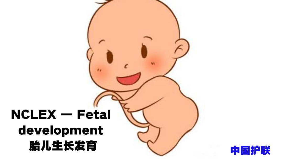 ISPN/RN课程培训国际护士出国-胎儿生长发育