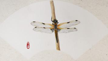 国画写意工笔入门教程 工笔蜻蜓