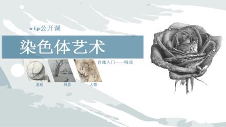 染色体美术——素描基础入门-精通【染色体艺术】