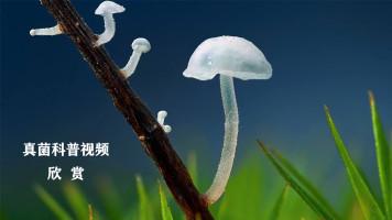 真菌科普视频欣赏