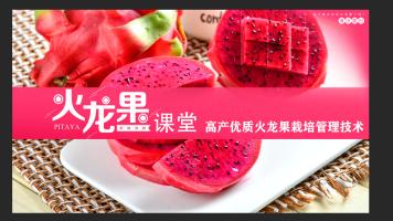 火龙果高产种植技术