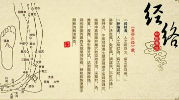 中医人必学的人体经络课程