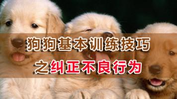狗狗基本训练技巧之纠正不良行为视频教程(20节课 家有乖狗狗)