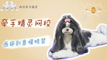 宠物美容西施模特装日韩系精致修剪