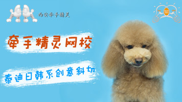 宠物美容泰迪日韩系创意斜切头