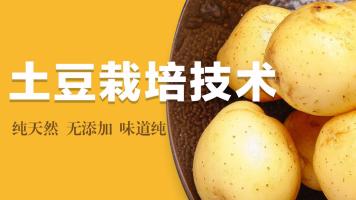 土豆栽培技术