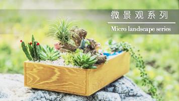 瑞娅花艺:微景观花艺系列