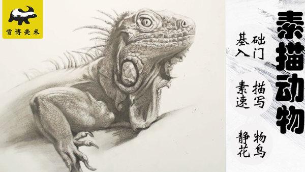 爬行类动物蜥蜴素描速成基础快速入门【实战速成】-肯博美术