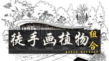 徒手画植物石头组合/线稿手绘表现(上战)