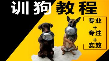 2020训狗教程训犬视频宠物狗训练幼犬上厕所训犬师指导
