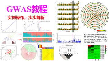 全基因组关联分析(GWAS)-实例操作教程