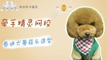 宠物美容泰迪日韩系创意蘑菇头