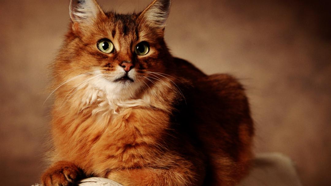 手绘课程 手绘动物--猫 水彩绘画 【火星人教育】