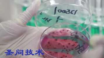 大肠菌群的测定-微生物检测员培训视频