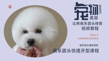 宠物美容视频,比熊美容视频,宠物美容教程,宠物美容师培训教程