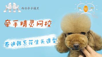 宠物美容泰迪韩系创意造型示范教程